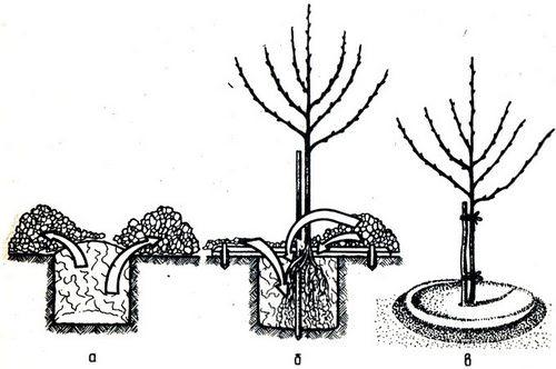 Сорт картофеля лабадия описание