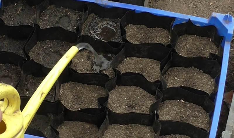 Как вырастить огурцы в домашних условиях на рассаду