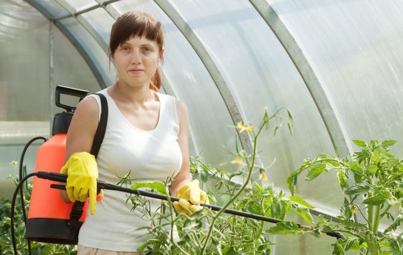 Внекорневая подкормка рассады томатов мочевиной 46