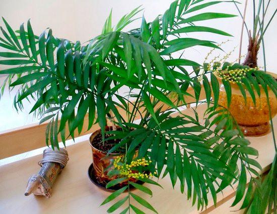 Фото всех пальмовых цветов