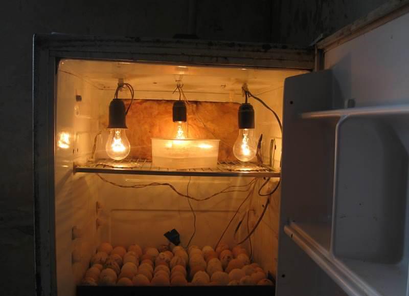 В домашних условиях изготовить инкубатор