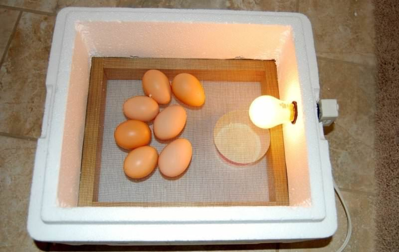 Инкубаторов для яиц сделать своими руками