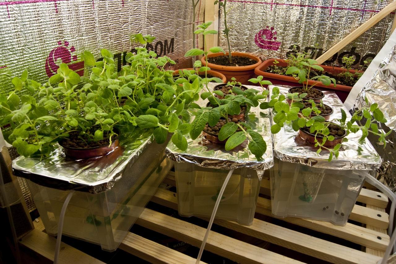 Огурцы - выращивание, посадка, уход. В открытом грунте и 6
