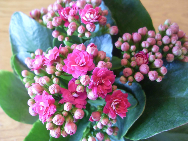 Можно ли дарить цветы в горшках 82