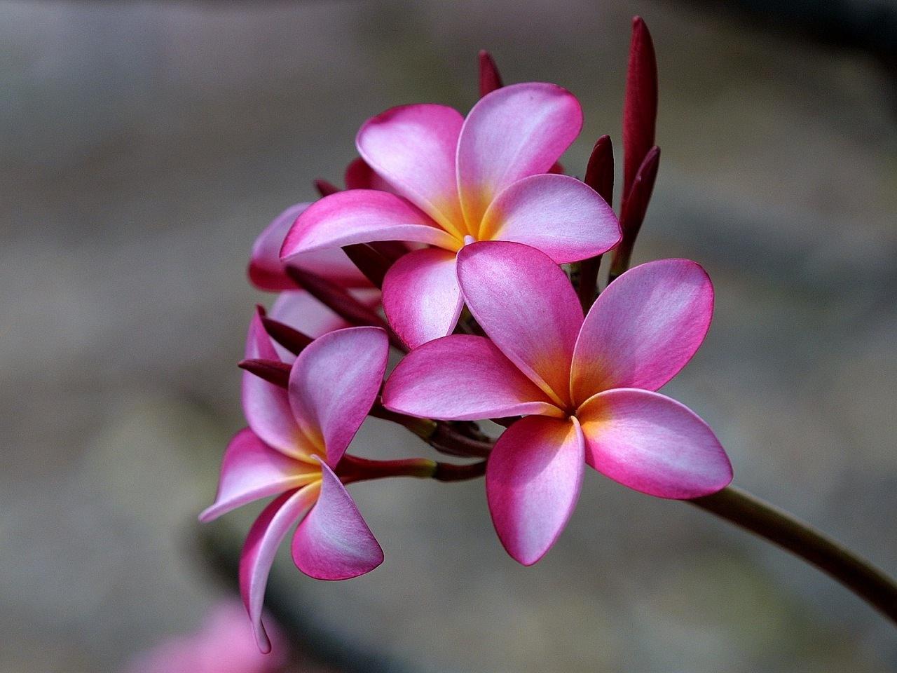 Belles photos de fleurs