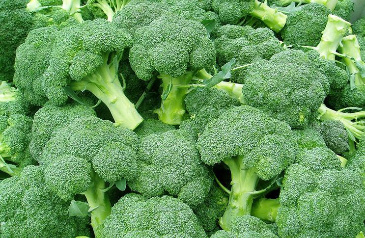 Ошибки при выращивании цветной капусты 85